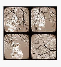 Look Through My Window - TTV Photographic Print