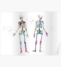 Human Body Skeleton Poster