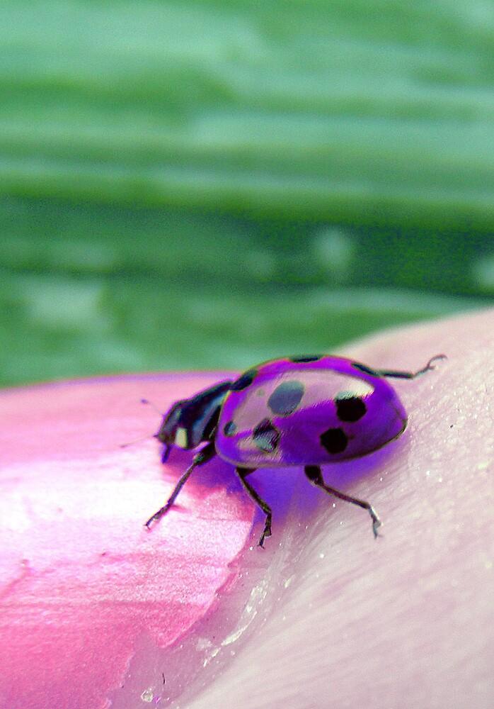 Glow Bug by viper720