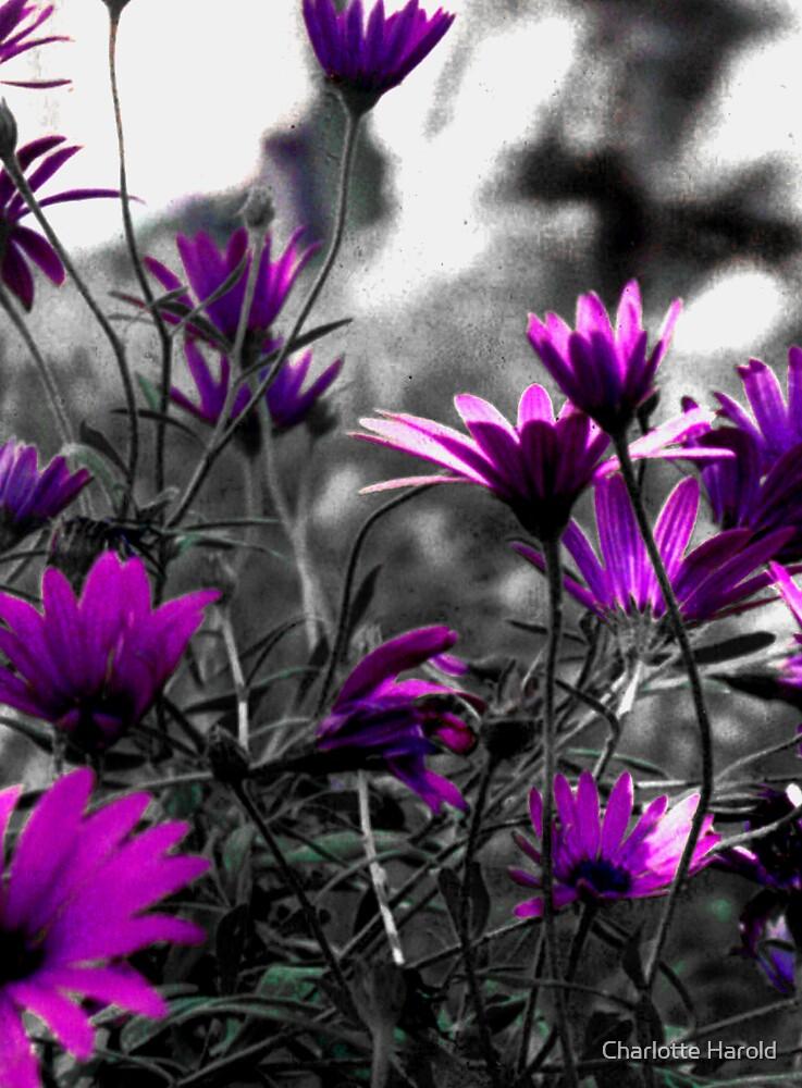 Purple Flowers by Charlotte Harold