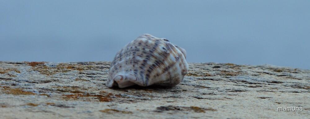 the small shell by mamuna