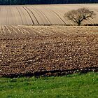 Lone Tree in Ploughed Field. by Billlee