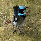 Bird on a rock. by Trish Meyer