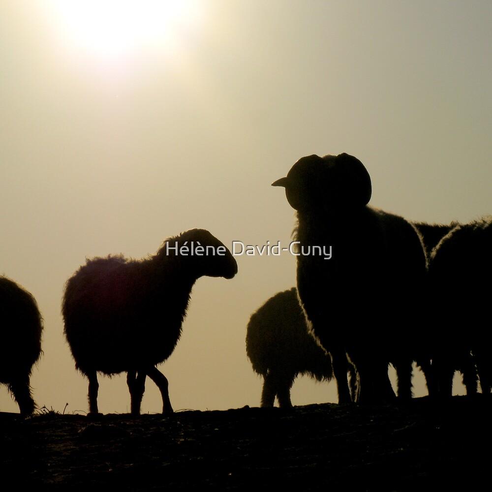 The flock by Hélène David-Cuny