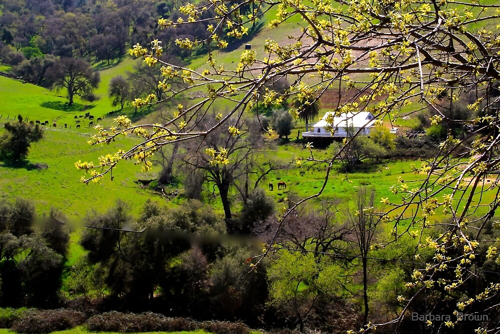 Foothill Spring by Barbara  Brown