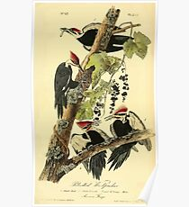 James Audubon Vector Rebuild - The Birds of America - From Drawings Made in the United States and Their Territories V 1-7 1840 - Pileated Woodpecker Poster