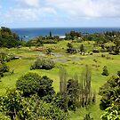 Driving Around Maui, Hawaii by Teresa Zieba