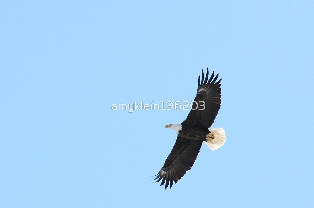 Eagle Eye by amyklein196203