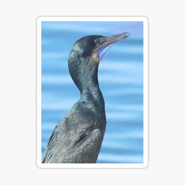 Port Townsend Cormorant Sticker