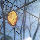 Approaching Winter by chiki