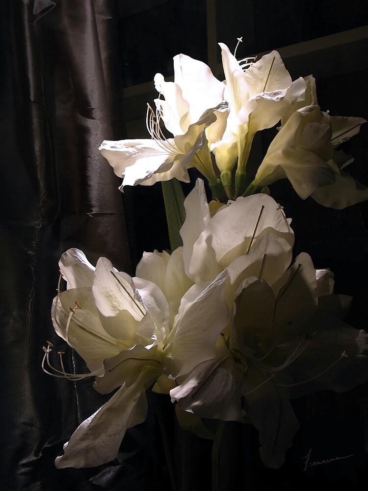 Amaryllis by Francesa