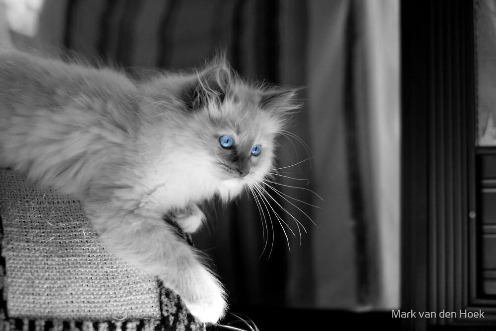 Blue Eyes by Mark van den Hoek