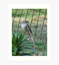 Little Bird On The Fence Art Print