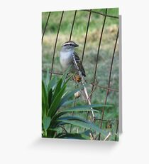 Little Bird On The Fence Greeting Card
