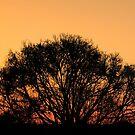 Nature Photography | Tree and Sunset Landscape by Leonardo Ramos