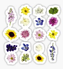 Linear Flower | Flower Pattern Sticker