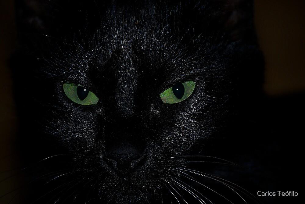 BLACK CAT by Carlos Teófilo