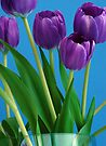 Vase of Tulips by Extraordinary Light