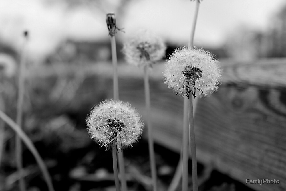 Weeds-black and white by FamlyPhoto