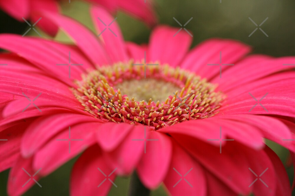 Pink Wink by Joy Watson