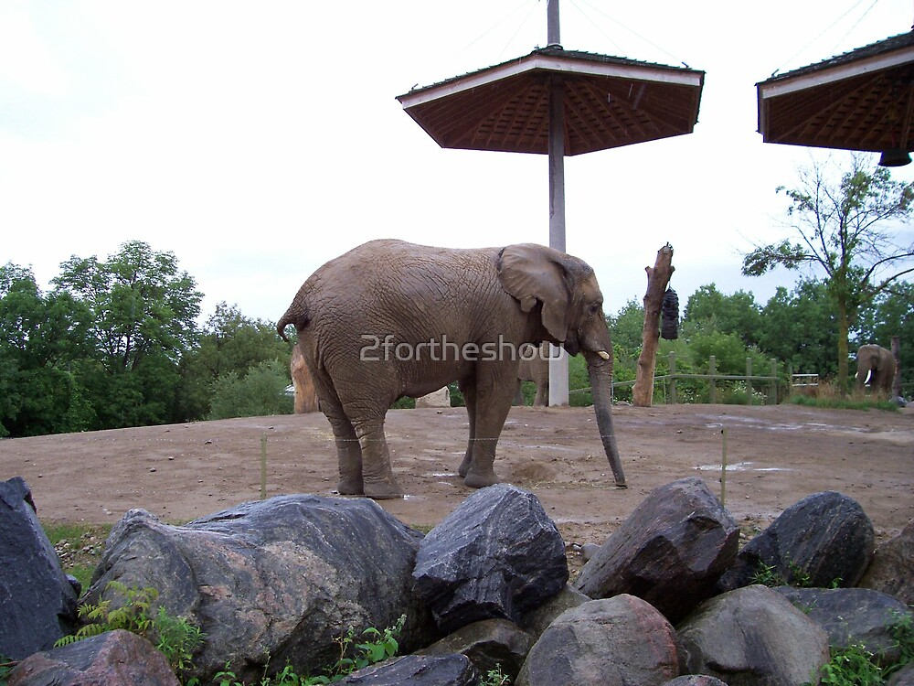 Elephant by 2fortheshow