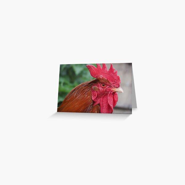 NDVH chicken Greeting Card