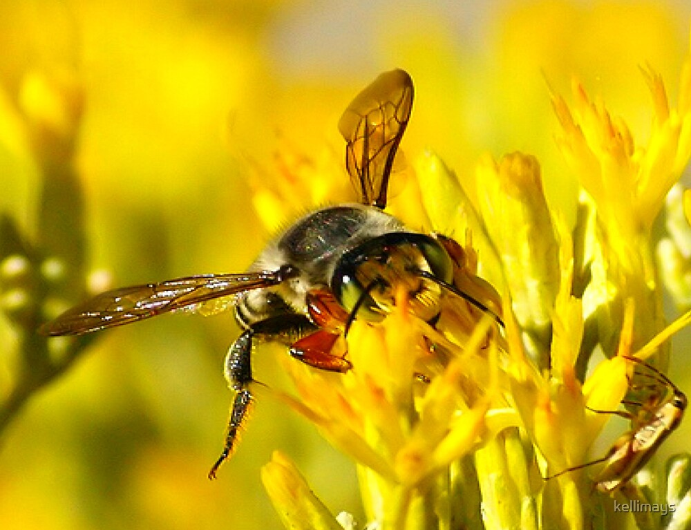Bee and his friend enjoying the yellow feast by kellimays