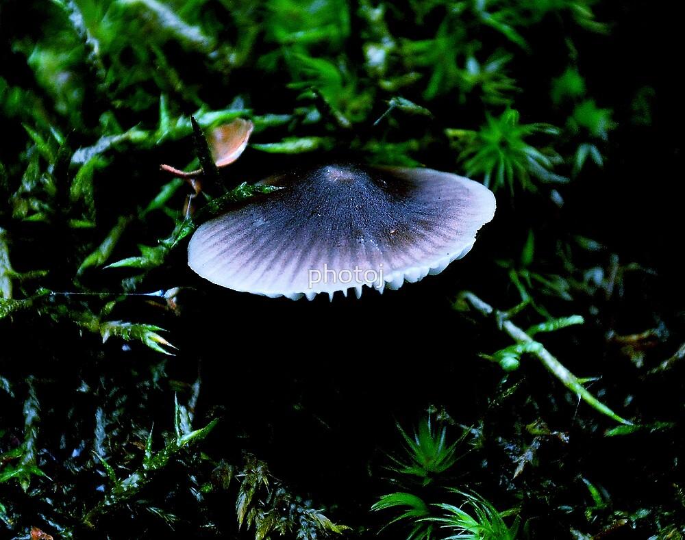 photoj Fungus by photoj