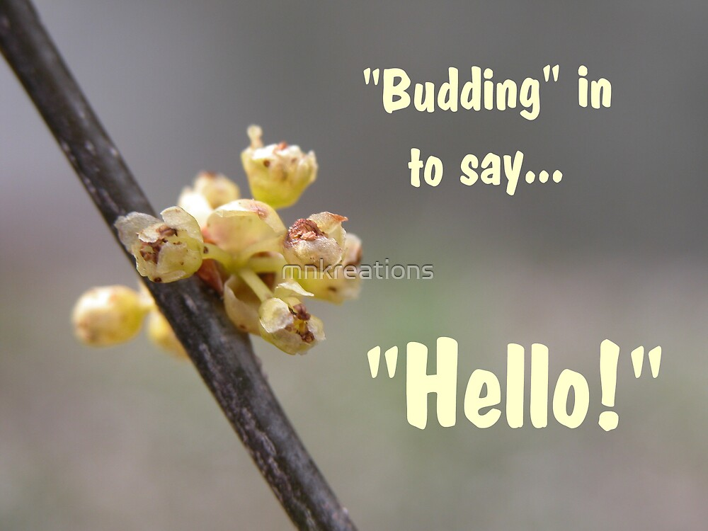"""""""Budding"""" In To Say ...""""Hello!"""" by mnkreations"""