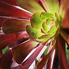 Succulent by CapturedbyC