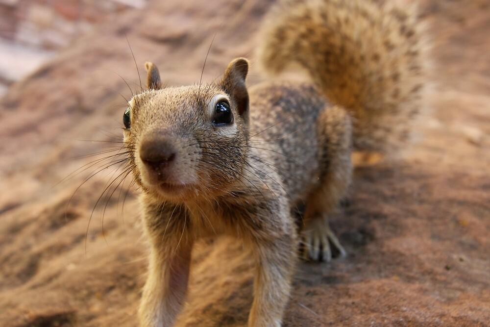 Friendly Squirrel by krasakala
