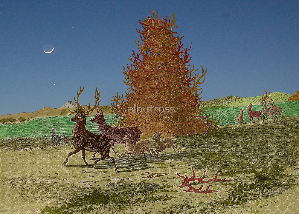 Staghorns, version two. by albutross
