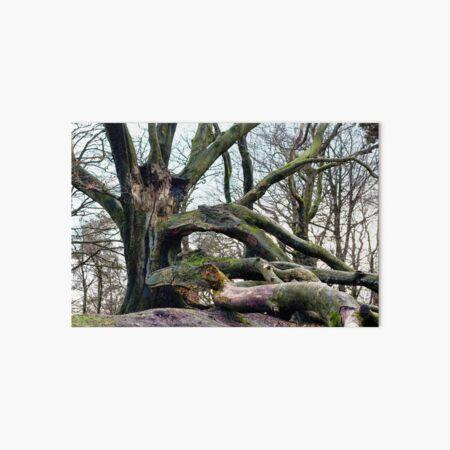 Broken Beech Tree Art Board Print
