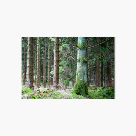 Green of the pine Art Board Print