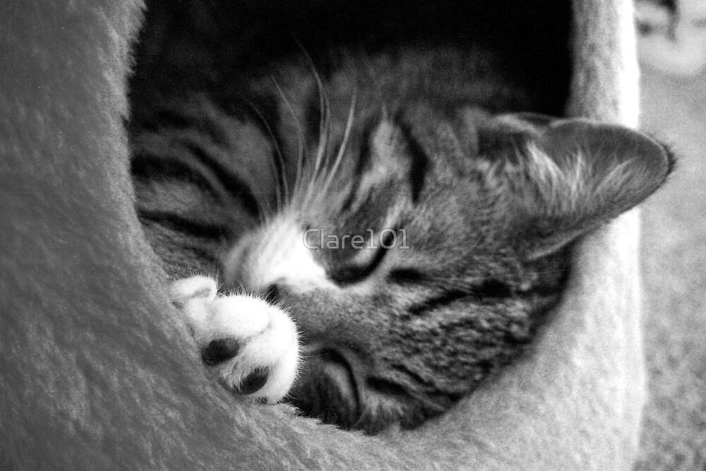 Cat Nap 3 by Clare101