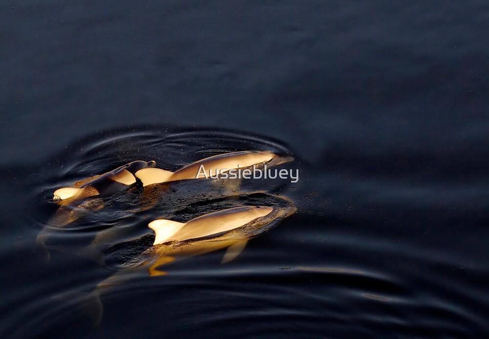 Golden Dolphins by Aussiebluey