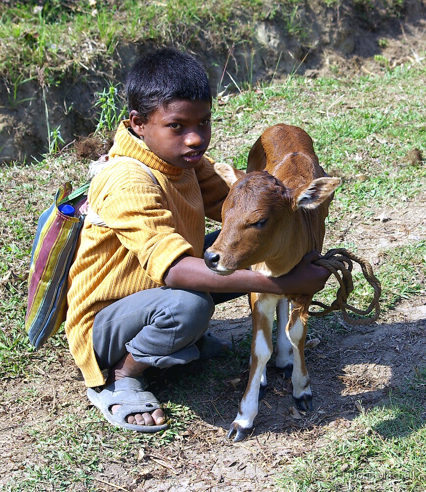 A boy and his calf by John Mitchell