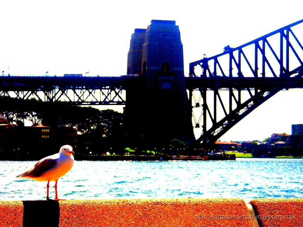 harbour gull sydney by alana janesse artist/ makeup artist