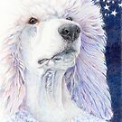 Dream dog - white standard poodle by doggyshop