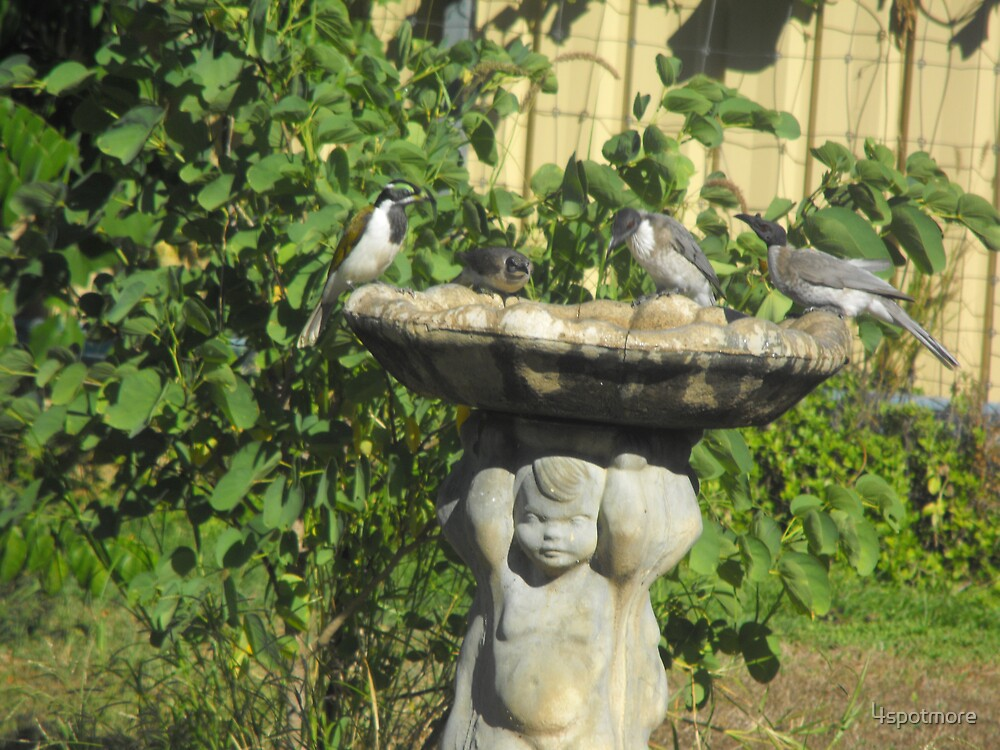 Wild Birds in for a Drink by 4spotmore