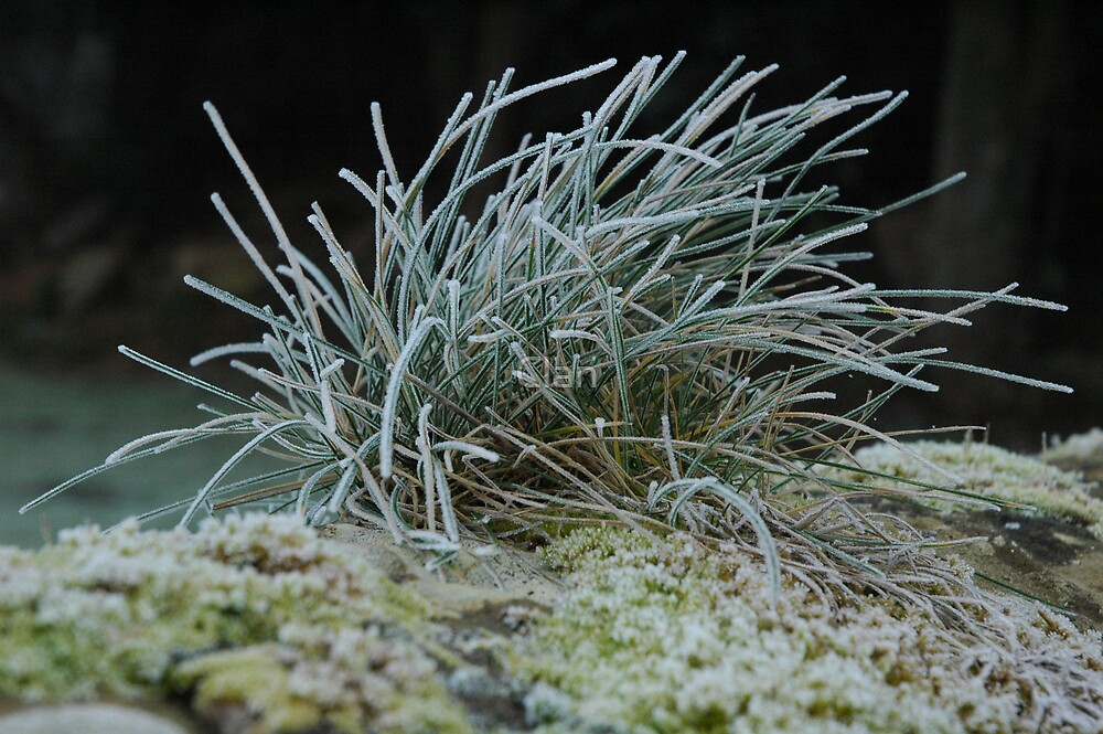 Cold Grass by Clan