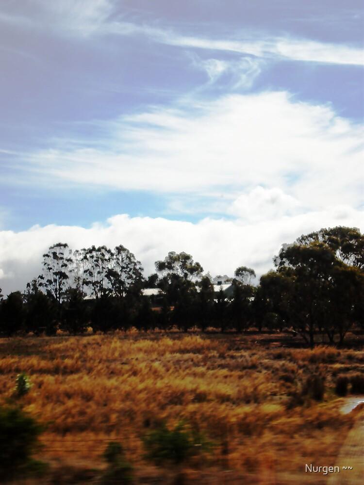 bush clouds by Nurgen ~~