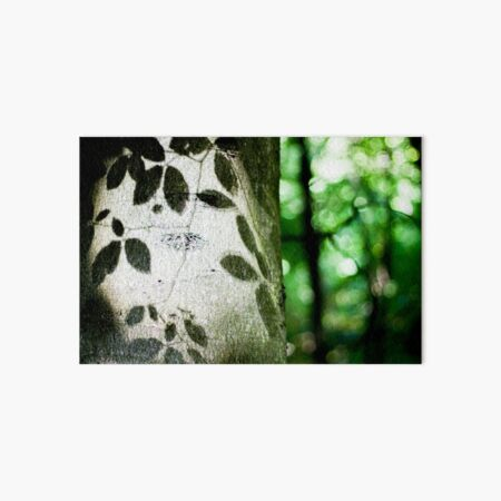 Beech tree leaf shadows Art Board Print