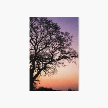 Oak Tree Sunset Art Board Print