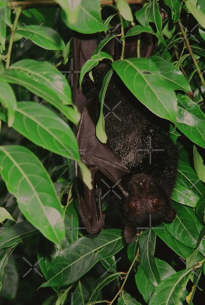 Fruit Bat  by Kymbo