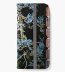 Bonsai Juniperus Meyeri At Night iPhone Wallet/Case/Skin