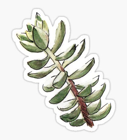 Plante grasse succulent Sticker