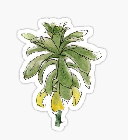 Plante grasse succulente Sticker