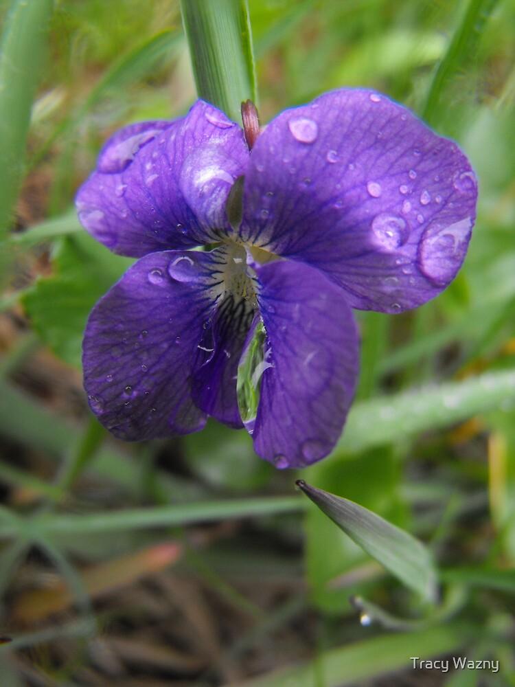 Rainy Day Blues by Tracy Wazny