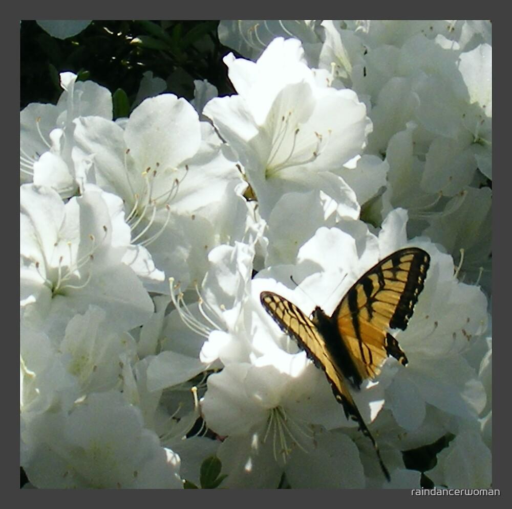 Butterfly in Friendship Garden by raindancerwoman